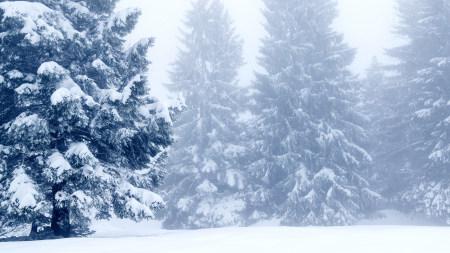冬天的雪松风景极品游戏桌面精选4K+高清壁纸