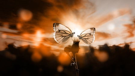 植物上的两只蝴蝶高端桌面4K+高清壁纸图片
