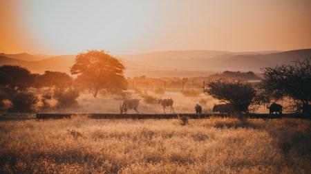 日落草原上的野生动物高端桌面4K+高清壁纸图片