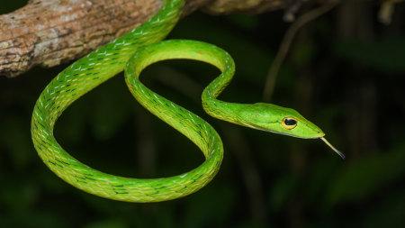 树枝上的绿蛇高端桌面4K+高清壁纸图片
