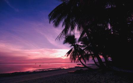 海边的棕榈树高端桌面4K+高清壁纸图片