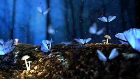 蓝色蝴蝶特写高端桌面4K+高清壁纸图片