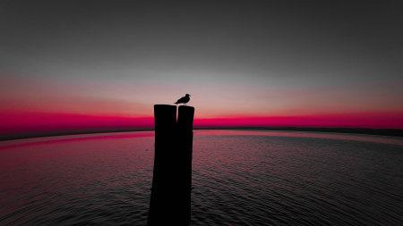木桩上的海鸥百变桌面精选高清壁纸