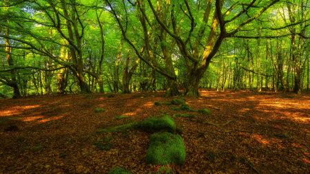 春天的森林极品游戏桌面精选4K+高清壁纸