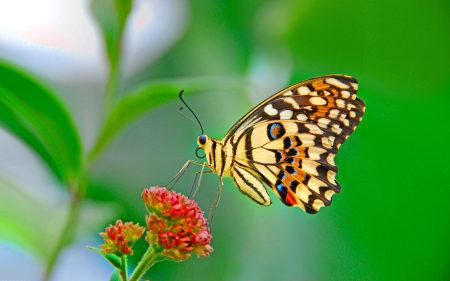 美丽的蝴蝶高端桌面4K+高清壁纸图片