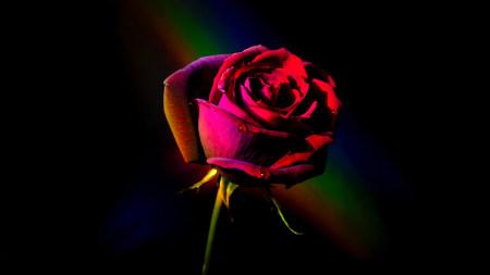 红玫瑰极品游戏桌面精选4K+高清壁纸