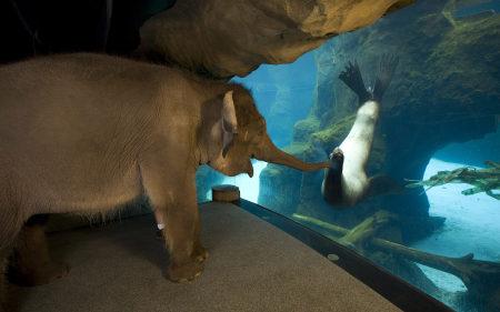 隔着玻璃触摸海豹的大象高端桌面4K+高清壁纸图片