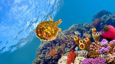 蓝色海底的珊瑚礁 小鱼儿 海龟高端桌面4K+高清壁纸图片