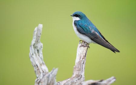 站在树枝上的小鸟高端桌面4K+高清壁纸图片