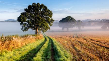 雾蒙蒙的田野高端桌面4K+高清壁纸图片