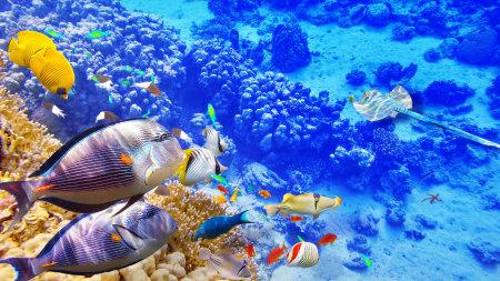 蓝色海洋中的鱼儿高端桌面4K+高清壁纸图片