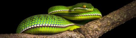 盘在树枝上的绿色毒蛇极品游戏桌面精选4K+高清壁纸