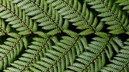 蕨类植物叶子极品游戏桌面精选4K+高清壁纸