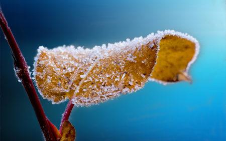 霜冻的树叶高端桌面4K+高清壁纸图片