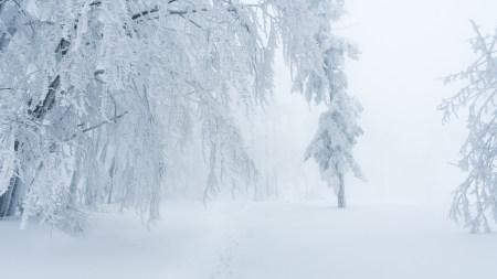 冬天大雪覆盖的树木和道路高端桌面4K+高清壁纸图片