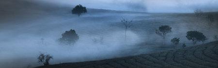 薄雾笼罩的茶园高端桌面4K+高清壁纸图片