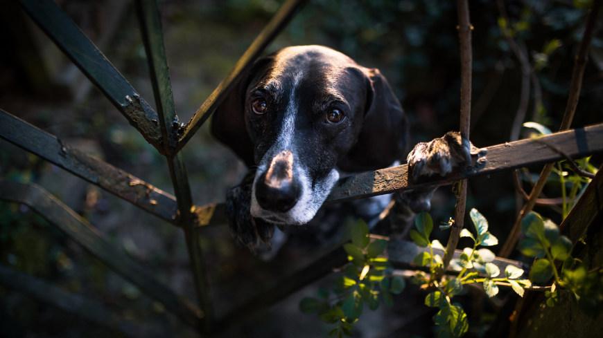 扒在铁门上的狗狗高端桌面4K+高清壁纸图片
