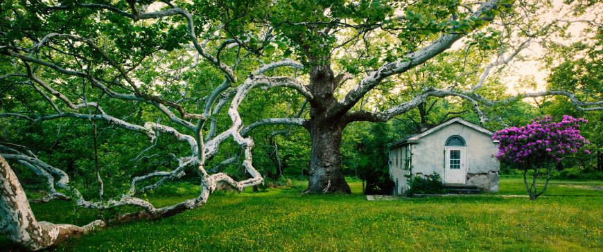 春天梧桐树下的老房子高端桌面4K+高清壁纸图片