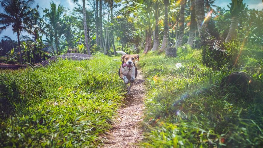 树林里奔跑的狗狗高端桌面4K+高清壁纸图片