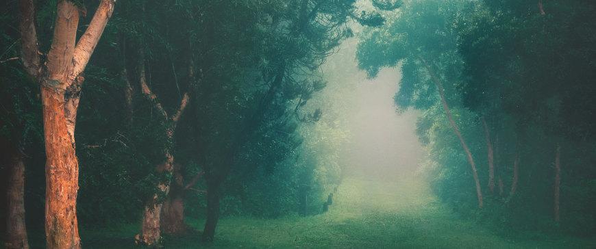 大雾中的雨林高端桌面4K+高清壁纸图片