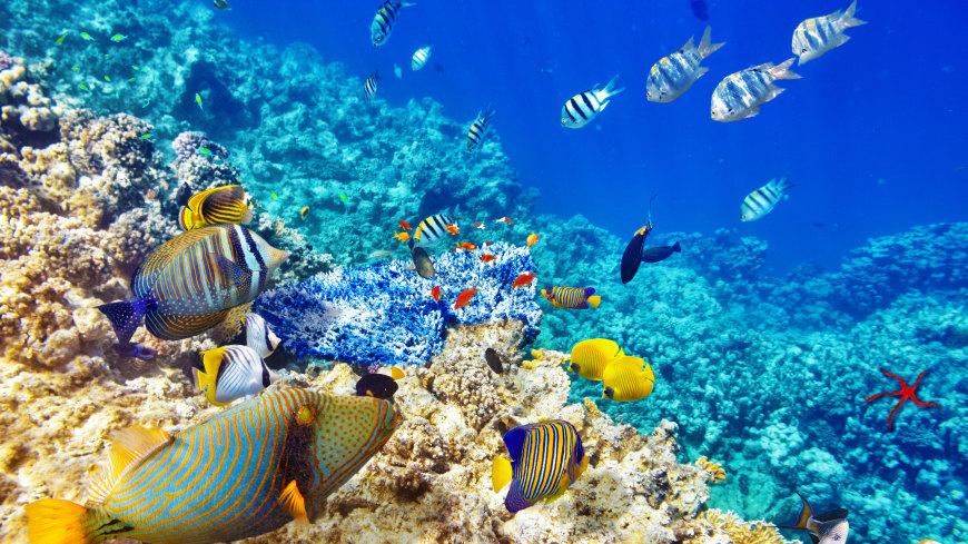 海底的鱼和珊瑚礁高端桌面4K+高清壁纸图片