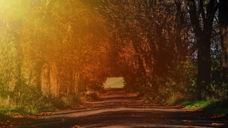 阳光照在林荫道上高端桌面4K+高清壁纸图片