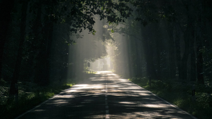 阳光透过树木洒在柏油路上高端桌面4K+高清壁纸图片