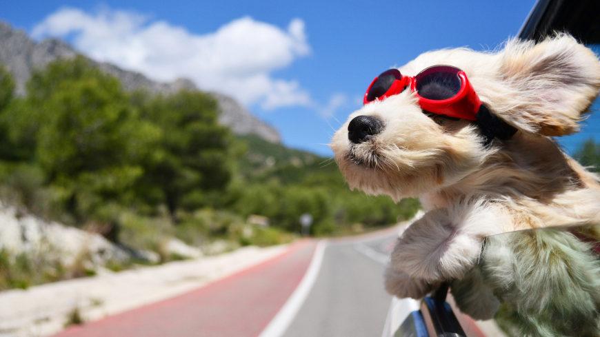 戴眼镜的狗高端桌面4K+高清壁纸图片
