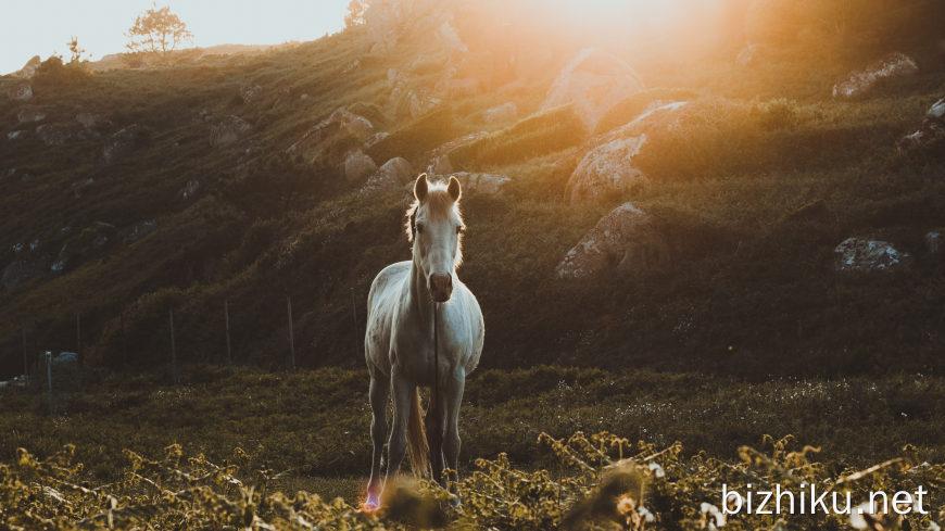 草地上的白马高端桌面4K+高清壁纸图片