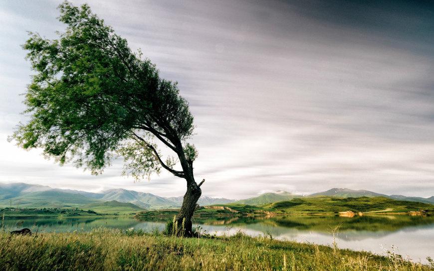 美丽的湖泊和大树高端桌面4K+高清壁纸图片