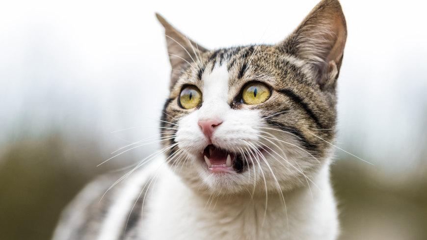 目瞪口呆的猫咪高端桌面4K+高清壁纸图片