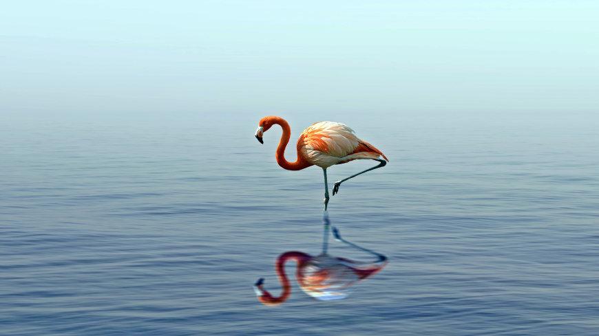 湖面的火烈鸟高端桌面4K+高清壁纸图片